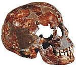 cranio uomo