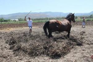 Festa della pesatura delle fave di Carpino @ Azienda Agricola Cannarozzi | Carpino | Puglia | Italia